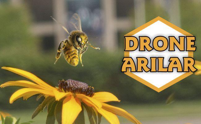Drone Arılar