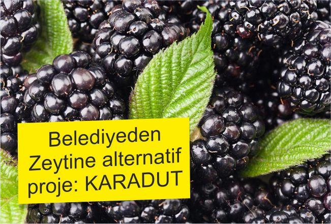 ZEYTİNE ALTERNATİF PROJE HAZIRLANDI