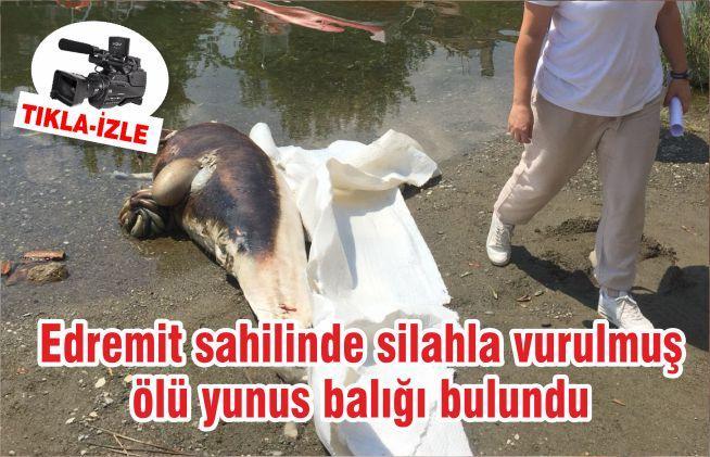 Edremit sahilinde silahla vurulmuş ölü yunus balığı bulundu