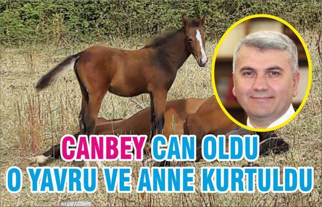 CANBEY CAN OLDU O YAVRU VE ANNE KURTULDU