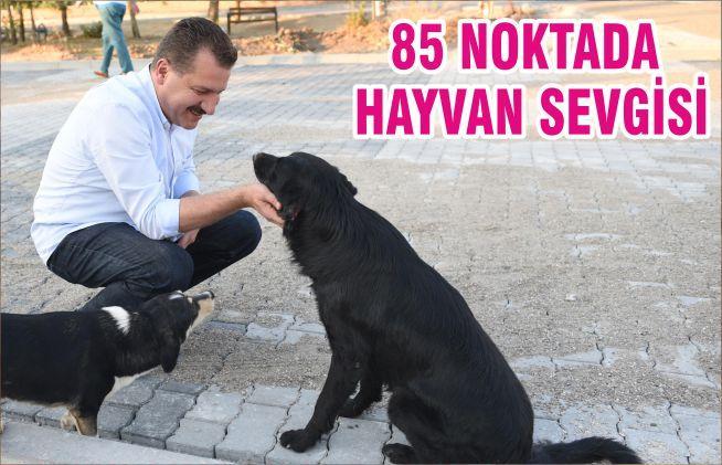 85 NOKTADA HAYVAN SEVGİSİ