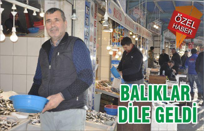 BALIKLAR DİLE GELDİ