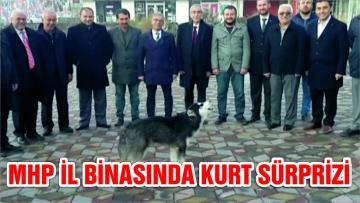 MHP Seçim İrtibat Bürosu Önünde Uluyan Kurt Şaşırttı