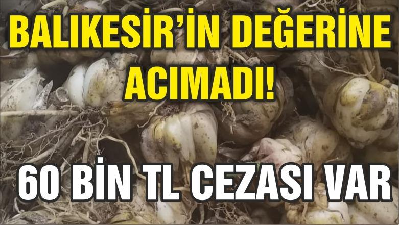 BALIKESİR'İN DEĞERİNE ACIMADI
