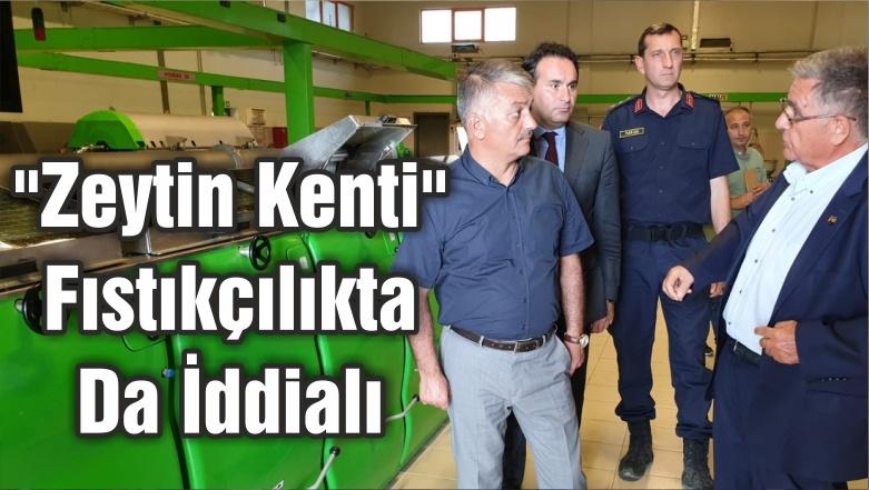 """""""Zeytin Kenti"""" Fıstıkçılıkta Da İddialı"""