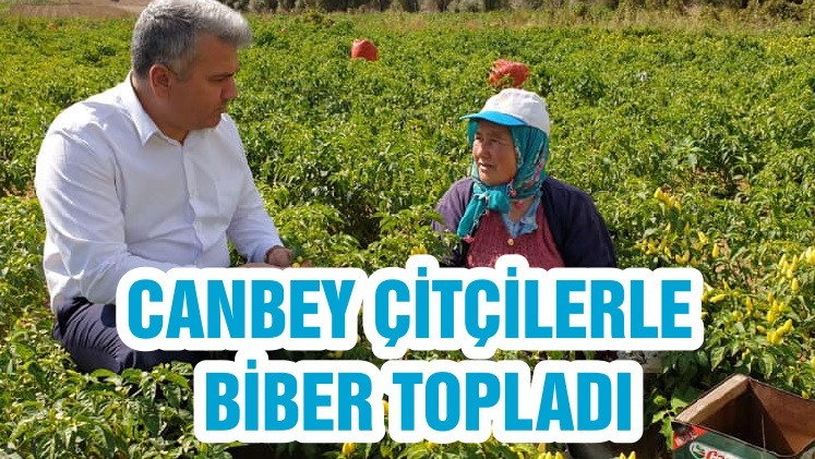 CANBEY ÇİTÇİLERLE BİBER TOPLADI