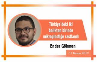 Türkiye'deki iki balıktan birinde mikroplastiğe rastlandı