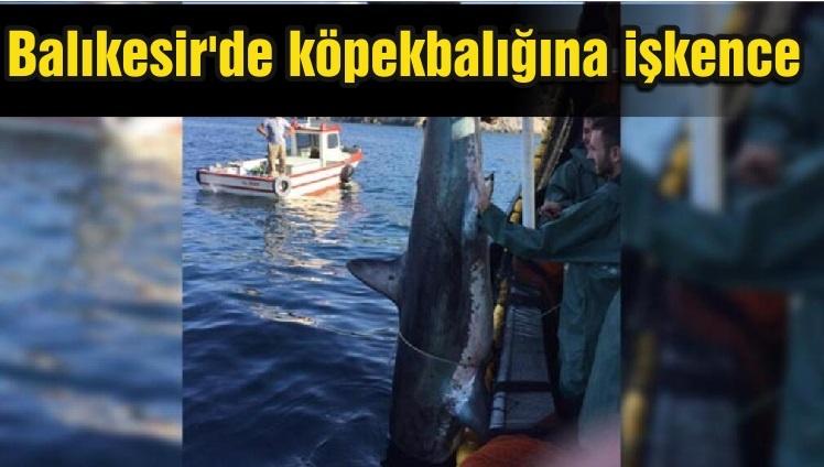 Balıkesir'de köpekbalığına işkence