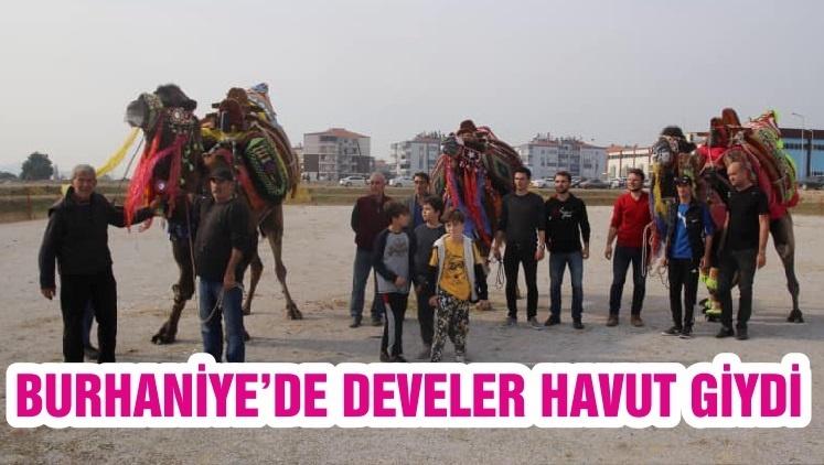 BURHANİYE'DE DEVELER HAVUT GİYDİ