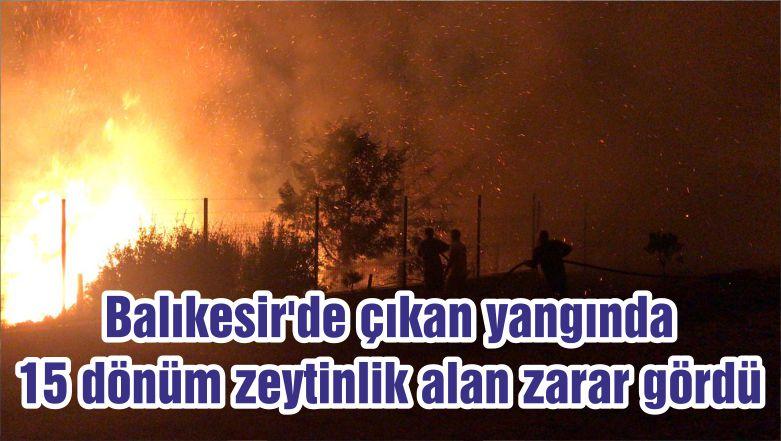 Balıkesir'de çıkan yangında 15 dönüm zeytinlik alan zarar gördü