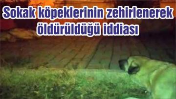 Sokak köpeklerinin zehirlenerek öldürüldüğü iddiası