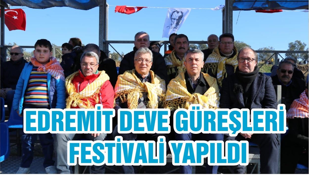 EDREMİT DEVE GÜREŞLERİ FESTİVALİ YAPILDI