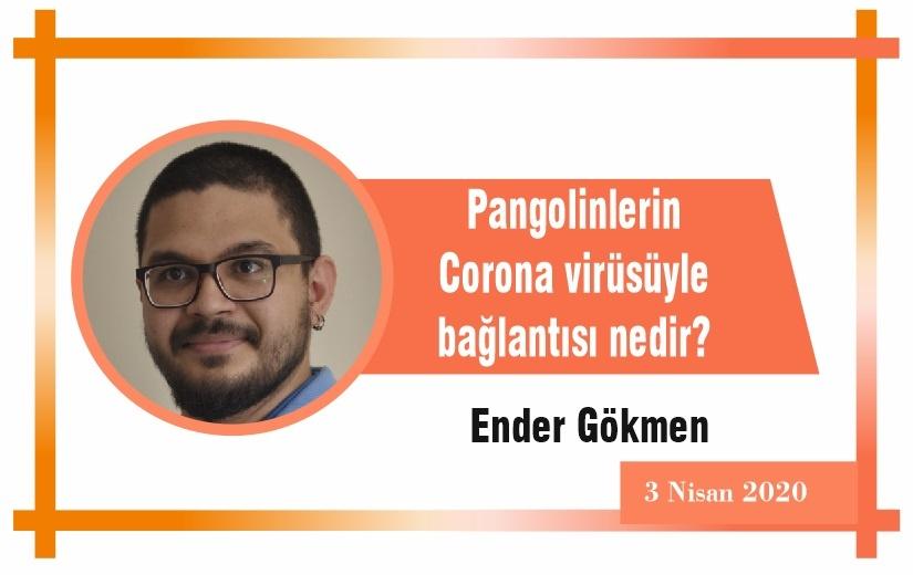 Pangolinlerin Corona virüsüyle bağlantısı nedir?