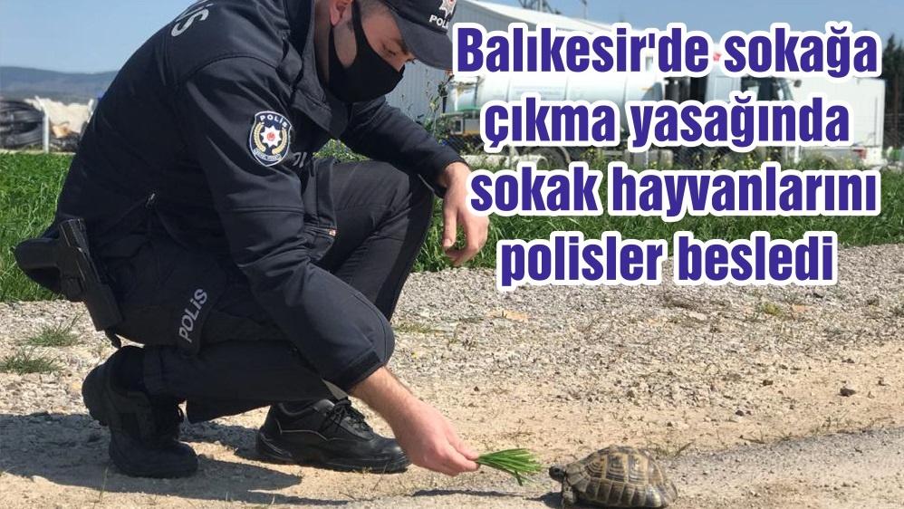 Balıkesir'de sokağa çıkma yasağında sokak hayvanlarını polisler besledi