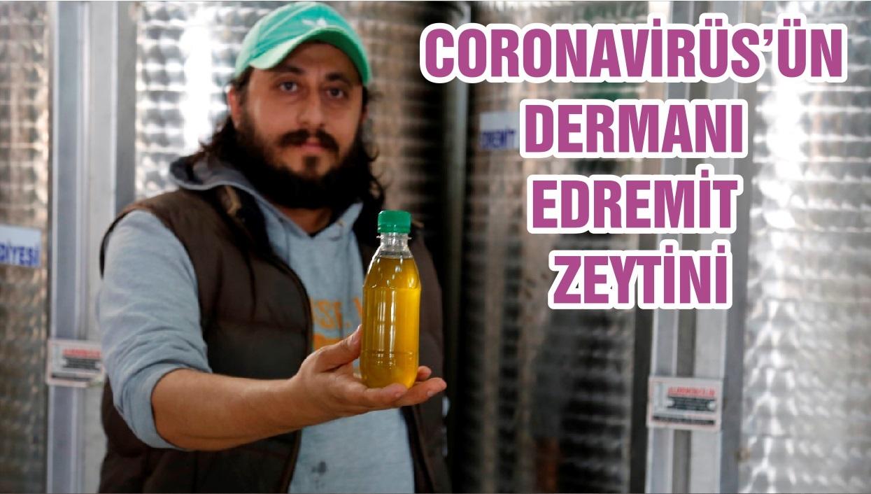 CORONAVİRÜS'ÜN DERMANI EDREMİT ZEYTİNİ