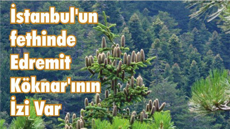 İstanbul'un fethinde Edremit Köknarının İzi Var