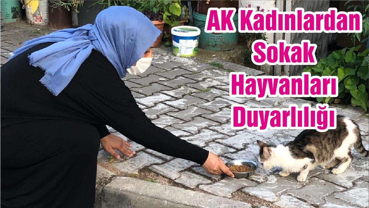 AK Kadınlardan Sokak Hayvanları Duyarlılığı