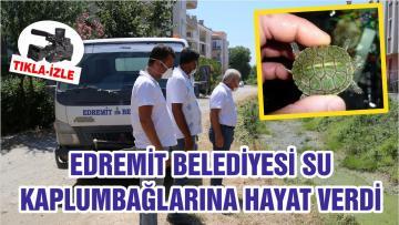 EDREMİT BELEDİYESİ SU KAPLUMBAĞLARINA HAYAT VERDİ
