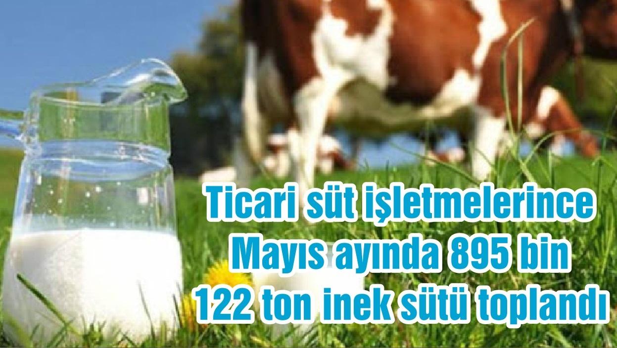 Ticari süt işletmelerince Mayıs ayında 895 bin 122 ton inek sütü toplandı