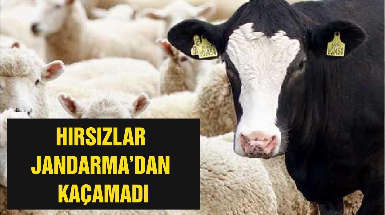 HIRSIZLAR JANDARMA'DAN KAÇAMADI