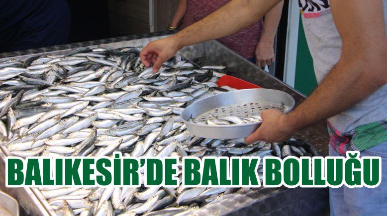 BALIKESİR'DE BALIK BOLLUĞU