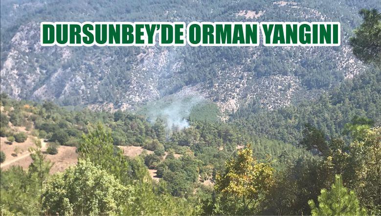 DURSUNBEY'DE ORMAN YANGINI