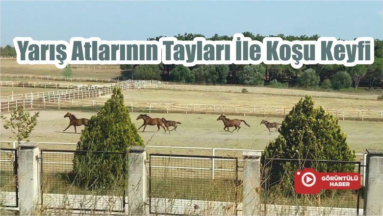 Yarış Atlarının Tayları İle Koşu Keyfi