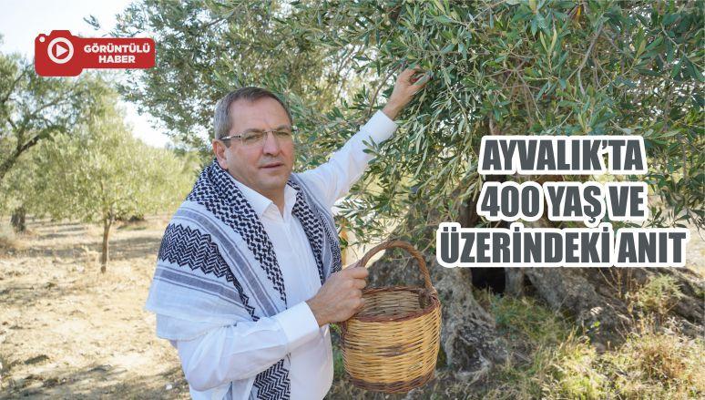 AYVALIK'TA 400 YAŞ VE ÜZERİNDEKİ ANIT