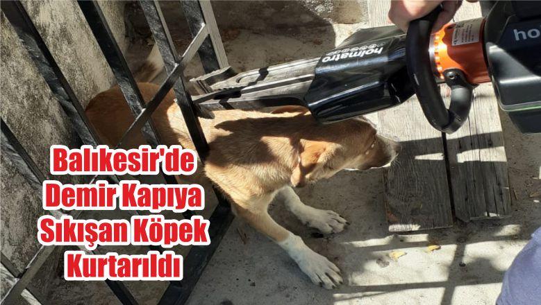 Balıkesir'de Demir Kapıya Sıkışan Köpek Kurtarıldı