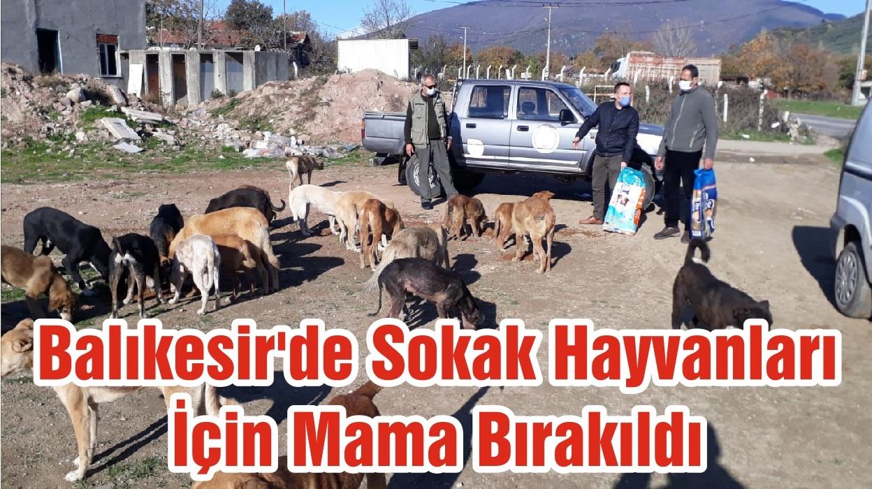Balıkesir'de Sokak Hayvanları İçin Mama Bırakıldı