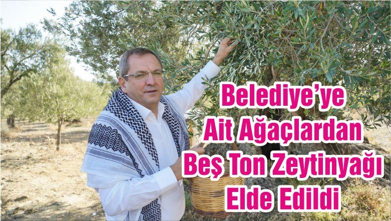 Belediye'ye Ait Ağaçlardan Beş Ton Zeytinyağı Elde Edildi