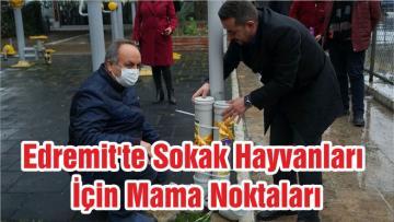 Edremit'te Sokak Hayvanları İçin Mama Noktaları
