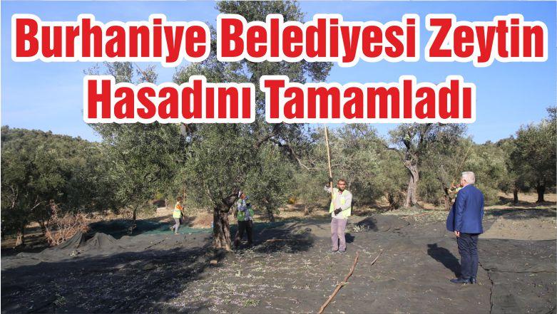 Burhaniye Belediyesi Zeytin Hasadını Tamamladı