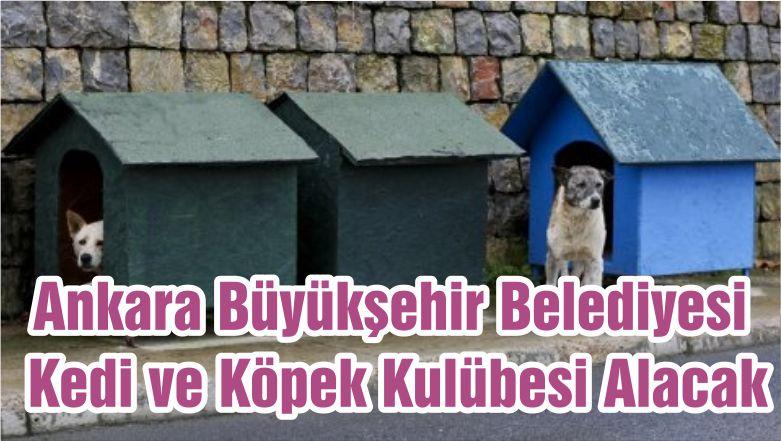 Ankara Büyükşehir Belediyesi Kedi ve Köpek Kulübesi Alacak