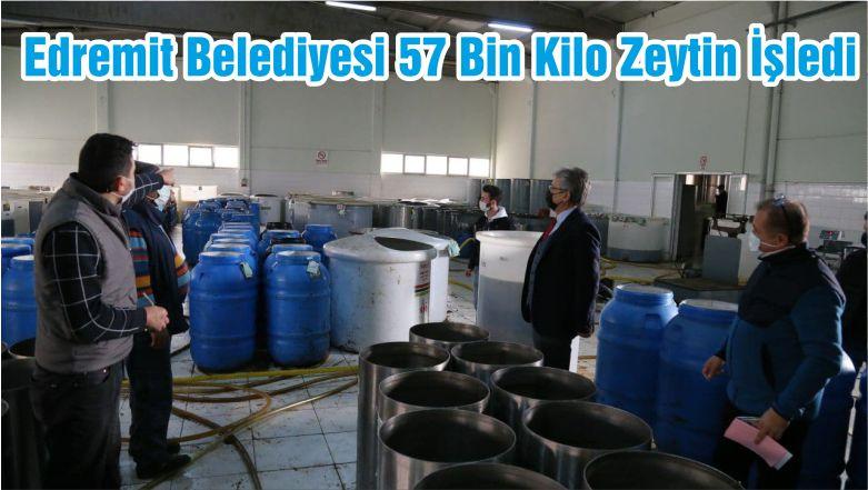Edremit Belediyesi'ne Ait 57 Bin Kilo Zeytin İşlendi