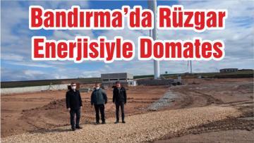 Bandırma'da RüZgar Enerjisiyle Domates