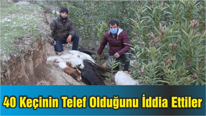 Ayvalık'ta 40 Keçinin Telef Olduğunu İddia Ettiler