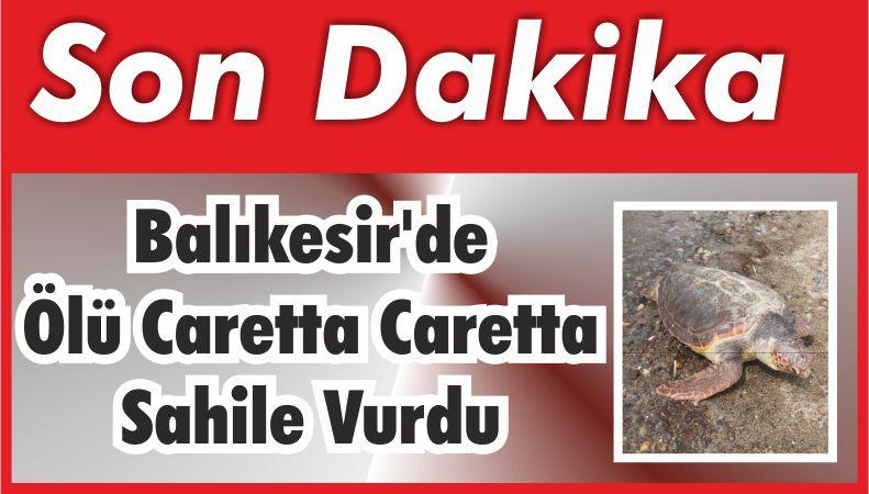 Balıkesir'de Ölü Caretta Caretta Sahile Vurdu