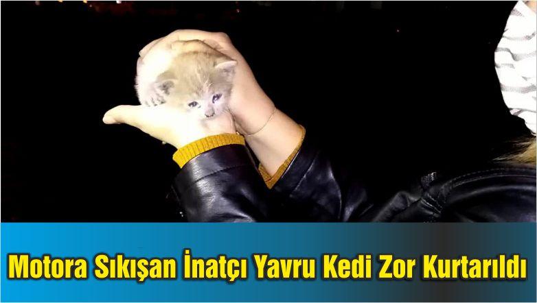 Otomobilin Motoruna Sıkışan İnatçı Yavru Kedi Zor Kurtarıldı