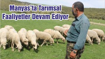 Manyas'ta Tarımsal Faaliyetler Devam Ediyor