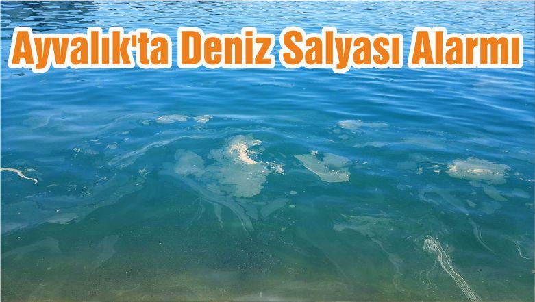 Ayvalık'ta Deniz Salyası Alarmı