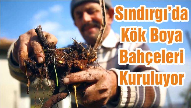Sındırgı'da Kök Boya Bahçeleri Kuruluyor