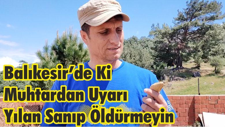"""Balıkesir'de Ki Muhtardan Uyarı: """"Yılan Sanıp Öldürmeyin"""""""