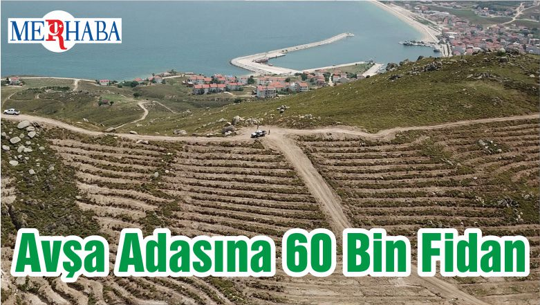 Avşa Adasına 60 Bin Fidan