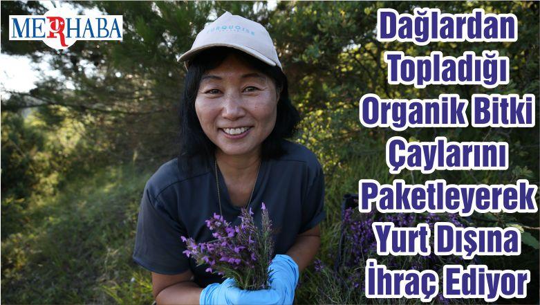 Dağlardan Topladığı Organik Bitki Çaylarını Paketleyerek Yurt Dışına İhraç Ediyor