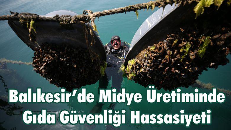 Balıkesir'de Midye Üretiminde Gıda Güvenliği Hassasiyeti
