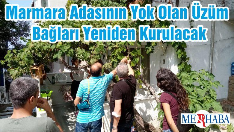 Marmara Adasının Yok Olan Üzüm Bağları Yeniden Kurulacak