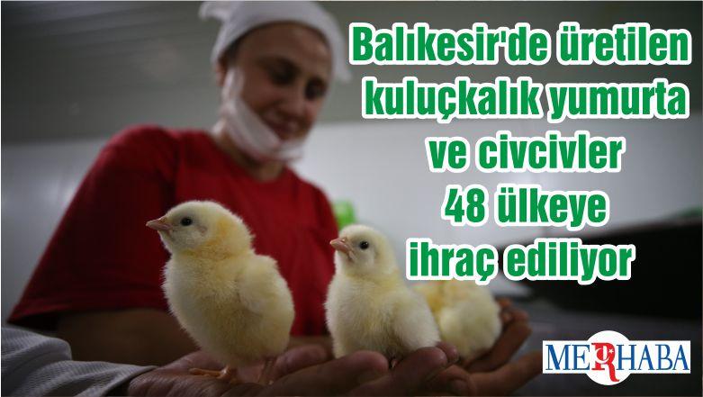 Balıkesir'de üretilen kuluçkalık yumurta ve civcivler 48 ülkeye ihraç ediliyor