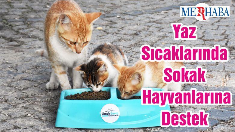 Yaz Sıcaklarında Sokak Hayvanlarına Destek