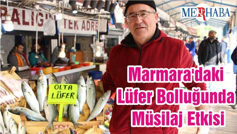 Marmara'daki Lüfer Bolluğunda Müsilaj Etkisi
